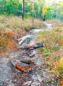 Tree trunk on the pathway leading through the forest — Stock Photo