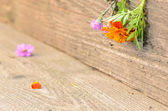 Flowers on rustic wood — Stok fotoğraf