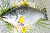 Zalm vissen — Stockfoto