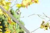 Papuga obiad — Zdjęcie stockowe