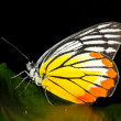 Colorful Butterfly - Foto Stock