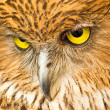 Stock Photo: Face of Owl