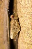 Night Butterfly — Stock Photo