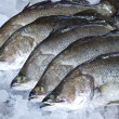 Stock Photo: Fresh Seabass chilled on ice