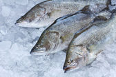 Fresh Seabass chilled on ice — Stock Photo
