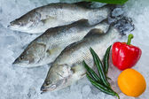 Fresh Seabass and vegetablechilled on ice — Stock Photo