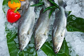 Fresh Seabass and vegetable chilled on ice — Stock Photo