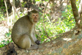Monkey sitting on a tree — Stock Photo