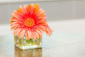 Pink Daisy in vase — Stock Photo
