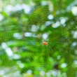 Stock Photo: Spider and cobweb in the forest