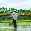 Farmer in Rice Paddy — Stock Photo #30390653