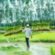 Farmer in Rice Paddy — Stock Photo #30391135