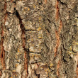 Texture of tree cortex — Stock Photo
