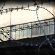 Stock Photo: Fence with barbed wire