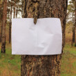 Sheet of paper on the trunk of pine — Stock Photo
