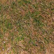 Dry grass background — Stock Photo
