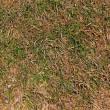 Dry grass background — Stock Photo #22123353