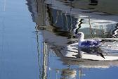 海鸥 2 — 图库照片