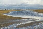 Zee ebbing landschap — Stockfoto