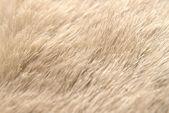 Animal hide detail — Stock Photo