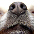 Nose of dog — Stock Photo