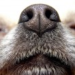 Nose of dog — Stock Photo #14736869