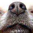 Nose of dog — Stock Photo
