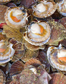 Seafood: Scallop — Stockfoto