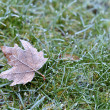 Stock Photo: Hoar-frost