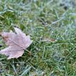 Hoar-frost — Stock Photo
