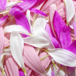 Petals background — Foto Stock