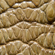 Crocodile leather texture — Stock Photo