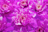 Beautuful Purple Flowers floting in the water — Stock Photo