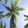 Stock Photo: Palm Trees