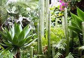 Numerose specie di cactus — Foto Stock