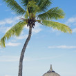 Tropical white sand beach with coconut trees, — ストック写真