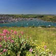 Salcombe Flowers Devon England — Stock Photo