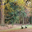Tranquil seated area in the autumn forset — Stock Photo