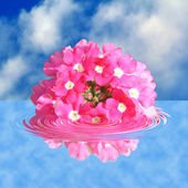 Flower in water — Stock Photo