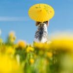Постер, плакат: Girl with parasol looking away blurred dandelions