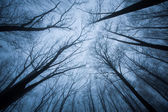 Dark scene with tree tops ending in fog — Stock Photo