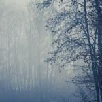 Forêt brumeuse avec des arbres au premier plan, espace copie — Photo #43385025
