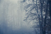 Foggy forest with trees in foreground, copy space — Stock Photo