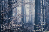 Melancholic foggy forest with leaves in the front — Stock Photo