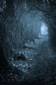 Dark spooky passage through the forest — Stock Photo