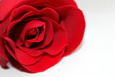 Freshness red rose for Valentine — Stock Photo