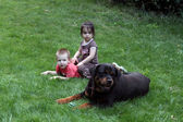 Two little children playing with dog — Stock Photo