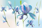 Background with irises, — Stock Vector