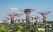 Supertree grove in garden by the bay  — Stock Photo