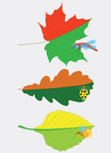 Different leaves and insects. — Stock Vector